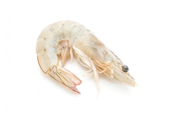 Fresh shrimps or prawns raw