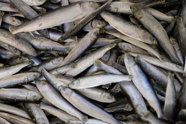 Fresh small fish background. anchovy, sprat or capelin fish flatlay.