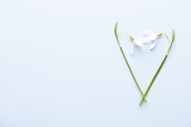 Fresh snowdrops on blue background with place for text.