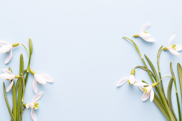 Fresh snowdrops on blue with place for text. spring greeting card. mother day. flat lay.