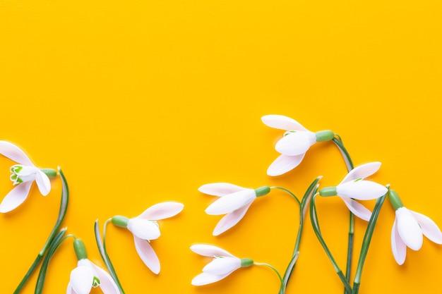 Свежие подснежники на желтом фоне с местом для текста. весенняя открытка. плоская планировка.