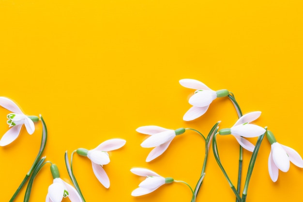 Fresh snowdrops on yellow background with place for text. spring greeting card. flat lay.