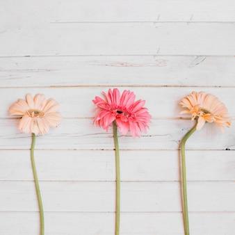 Свежие мягкие цветы на столе