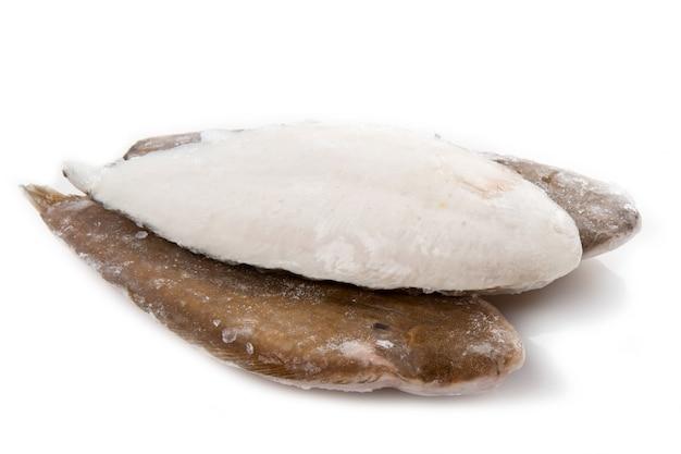 흰색 바탕에 신선한 단독 생선