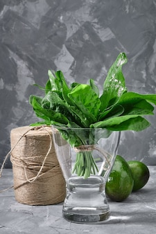 Fresh sorrel leaves in a glass vase with water, organic products for the store, eco packaging, grocery delivery