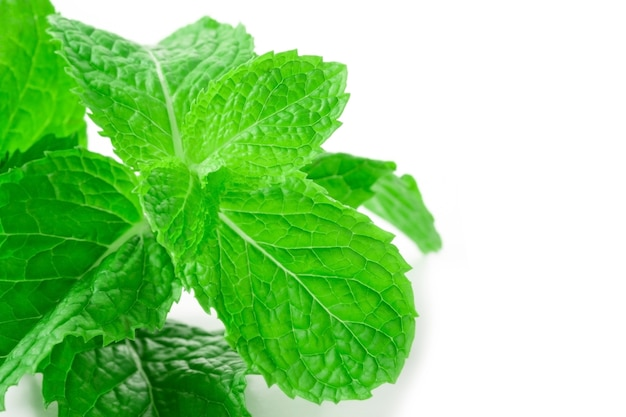 Fresh spearmint leaves isolated on the white background. close up beautiful mint.