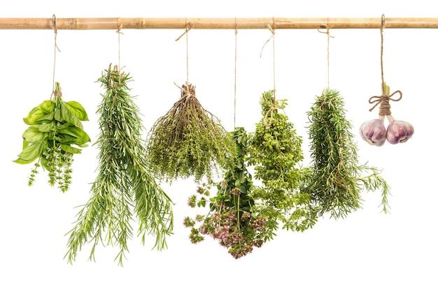 Свежие пряные травы, изолированные на белом фоне, розмарин, базилик, тимьян, орегано, здоровое питание