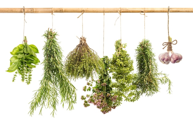 Fresh spicy herbs isolated on white background rosemary basil thyme oregano healthy food
