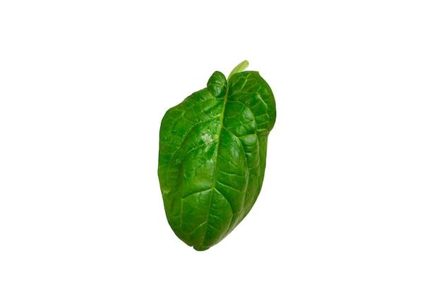 Лист свежий шпинат, изолированные на белом.