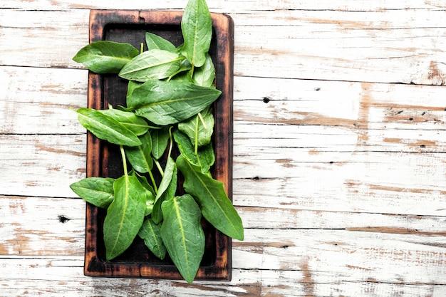 Fresh spinach leafs