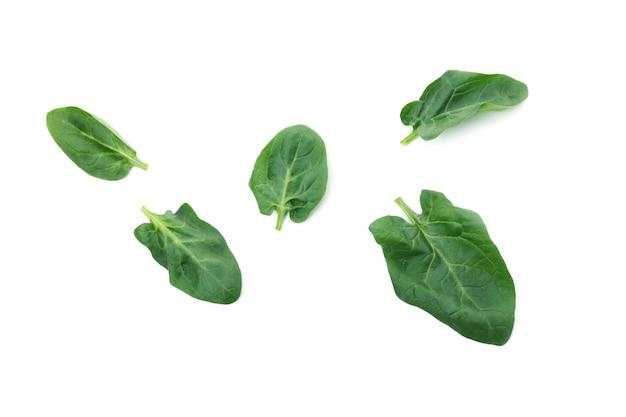 신선한 시금치 잎에 고립 된 흰색 표면