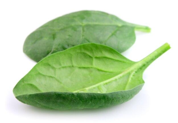 Свежий шпинат на белом фоне