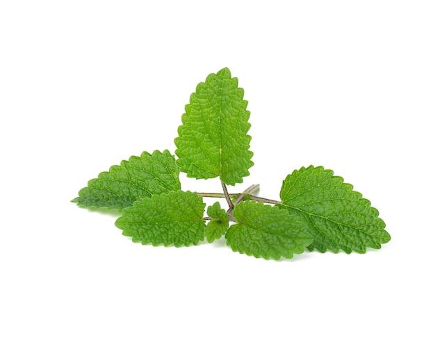 白い背景に分離された緑の葉、香りのよいスパイスとミントの新鮮な小枝