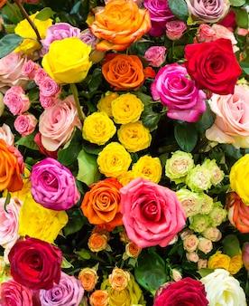 新鮮な春のカラフルなバラのクローズアップ