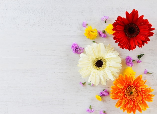 Fresh spring flowers gerbera colorful and flower various on white wood