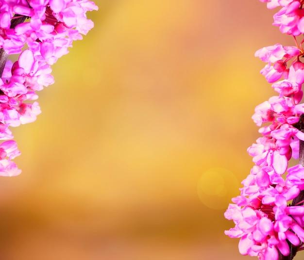 낭만적 인 소원에 완벽한 노란색 배경 위에 신선한 봄 꽃