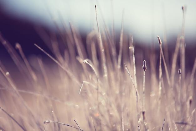 自然の焦点がぼけた自然に滴る新鮮な春の草