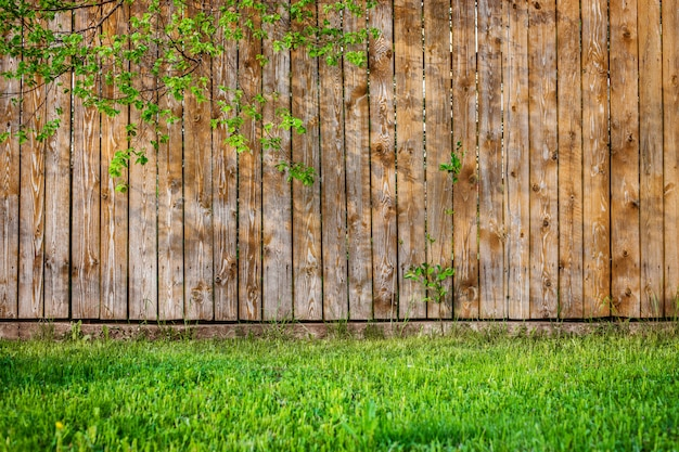 Fresh spring green grass leaf plant over wood fence