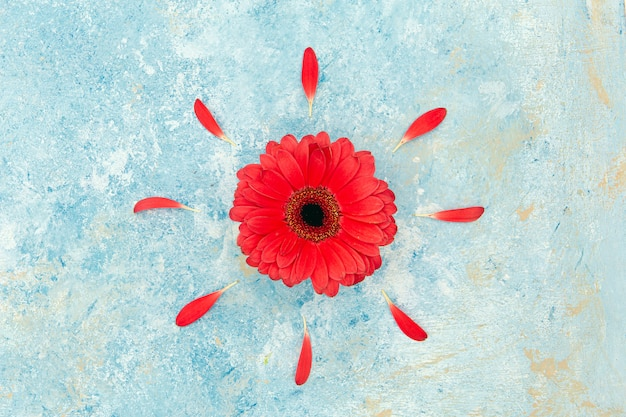Fresh spring red flower and petals over blue textured background