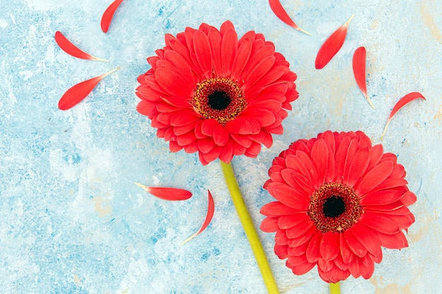 Fresh spring red flowers and petals over blue textured background