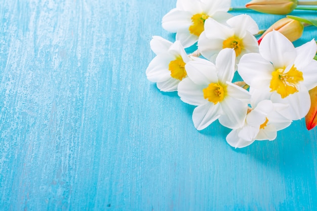 Fresh spring red tulips and narcissus flowers on turquoise painted wooden plank.