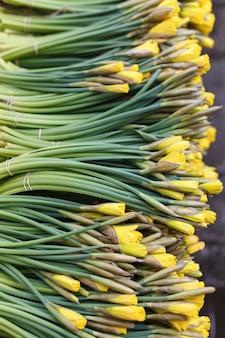 Свежие весенние желтые цветы в магазине. букет нарциссов. весенняя пора и подготовка к пасхе.