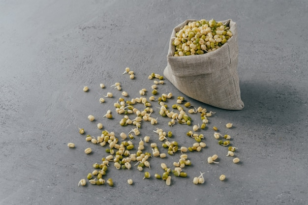 Fresh sprouted mung beans in canvas sack and spread on grey surface.