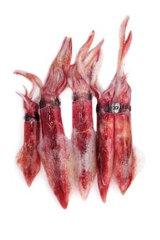Fresh squid loligo vulgaris seafood catch