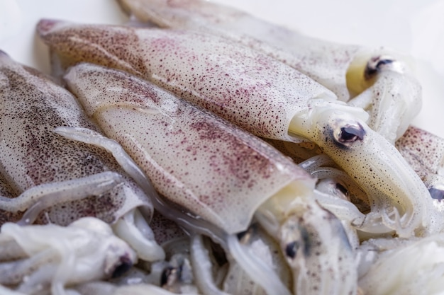 Fresh squid in plate : ingredient of seafood.