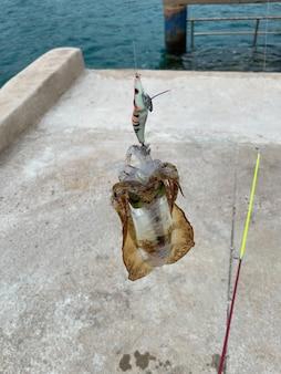 海からのフック付きの新鮮なイカ、漁師のイカ釣り。釣り竿。