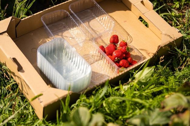フィールドの背景に木製の箱の新鮮なイチゴ