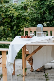 Fresh strawberries in a plate on a garden table being served for breakfast cat is hiding under the t...