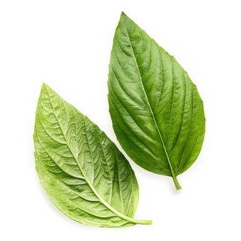 白い背景で隔離の新鮮な甘いバジルの葉。イタリアのバジルの葉の分離。