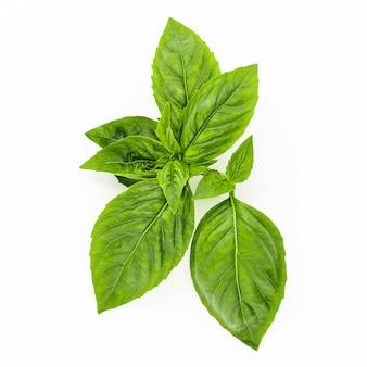 Fresh sweet basil leaves isolated on white background. isolated of italian basil leaf .