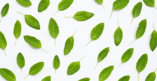 白地に新鮮な甘いバジルの葉