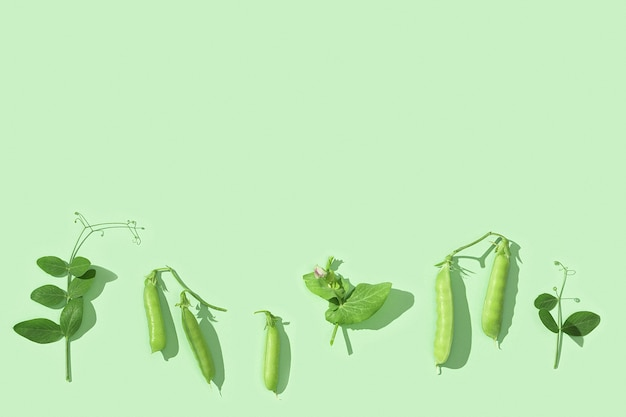新鮮な甘いグリーンピースのさやと葉エンドウ豆苗健康野菜食品