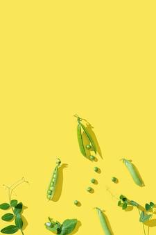 잎, 완두콩 콩나물, 어린 녹색 싹이있는 신선한 달콤한 녹색 완두콩 포드