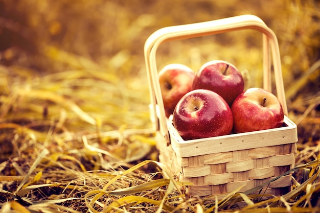 Fresh tasty red apples in wooden basket on red autumn background