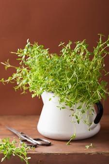 Свежая трава тимьяна в эмалированной посуде