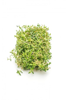 Fresh thyme isolated
