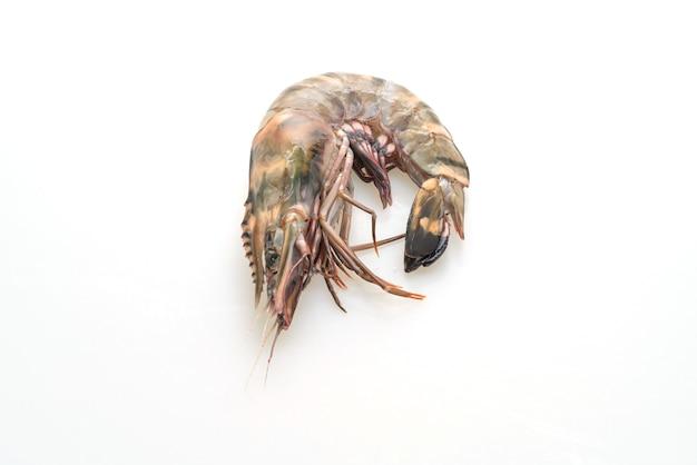 Свежие тигровые креветки или креветки на белом фоне