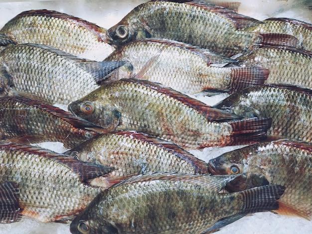 Fresh tilapia fish on ice at the supermarket