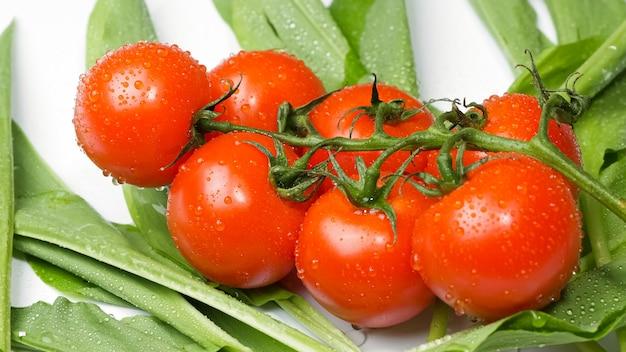 흰색 배경 평면도에 신선한 토마토