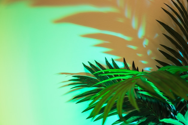 Fresh tropical green leaves with shadow on colored background