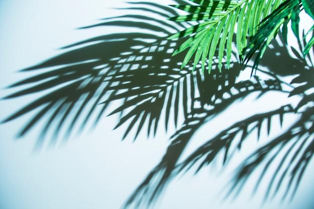 파란색 배경에 신선한 열 대 야 자 잎 그림자