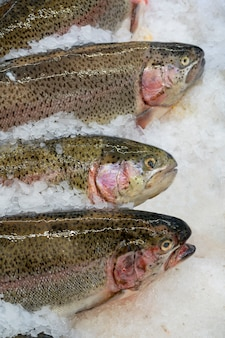 Fresh trout fish on an ice counter in a supermarket,