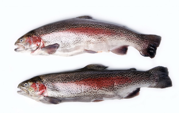 Fresh trout isolated on white