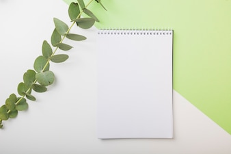 Fresh twig and blank spiral notebook on dual white and green backdrop