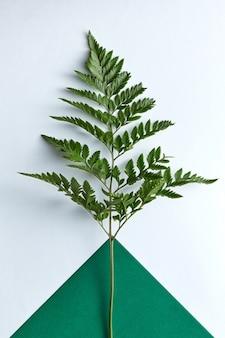 Свежий папоротник ветки на двойном темно-зеленом и сером с копией пространства. натуральная композиция как макет. плоская планировка