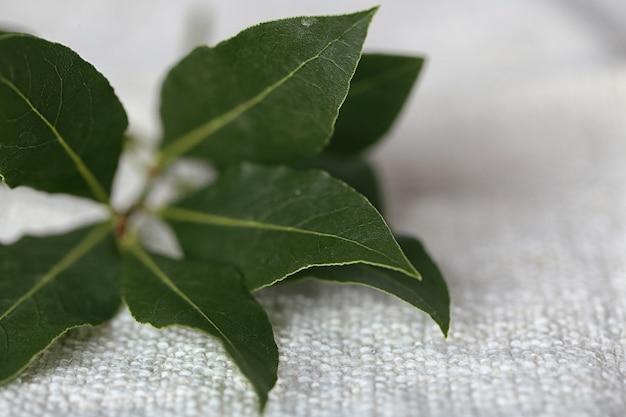 月桂樹の葉と新鮮な小枝、クローズアップ